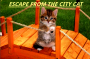 escape_from_the_citty_cat_cover.png